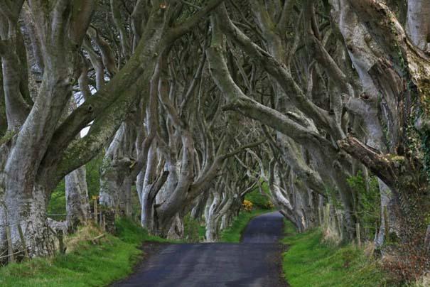 The Dark Hedges: Ένας δρόμος βγαλμένος από παραμύθι (14)