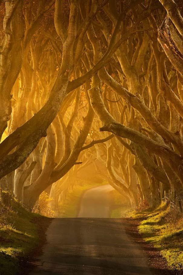 The Dark Hedges: Ένας δρόμος βγαλμένος από παραμύθι (17)
