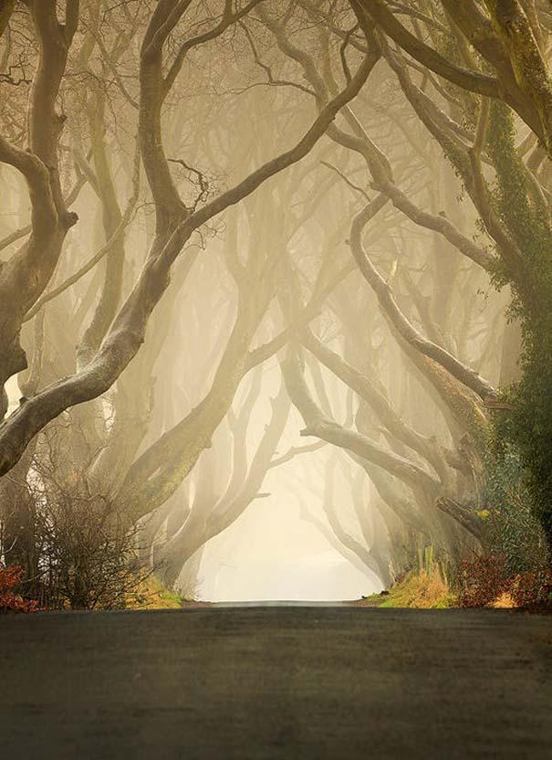 The Dark Hedges: Ένας δρόμος βγαλμένος από παραμύθι (18)