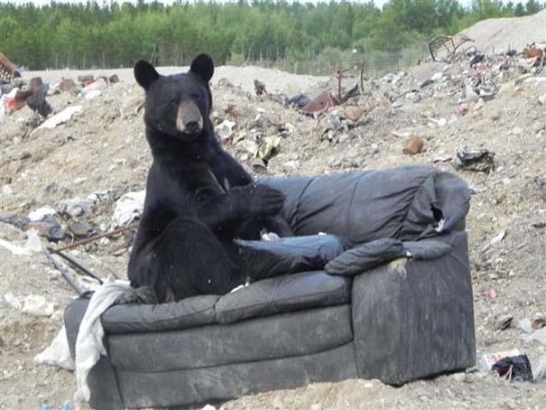 Τι κάνει μια αρκούδα όταν βρει έναν παλιό καναπέ; (2)
