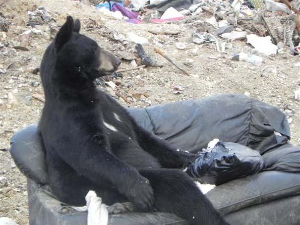 Τι κάνει μια αρκούδα όταν βρει έναν παλιό καναπέ; (3)