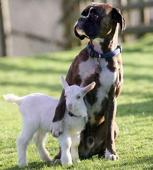 Ζώα που φροντίζουν άλλα ζώα (1)