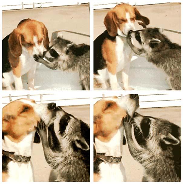 Ζώα που φροντίζουν άλλα ζώα (5)
