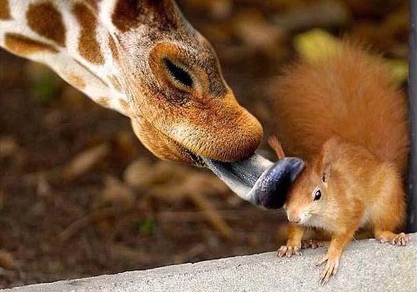 Ζώα που φροντίζουν άλλα ζώα (12)