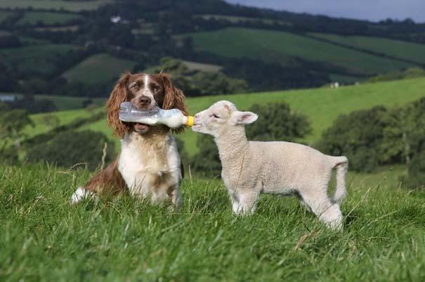 Ζώα που φροντίζουν άλλα ζώα (13)