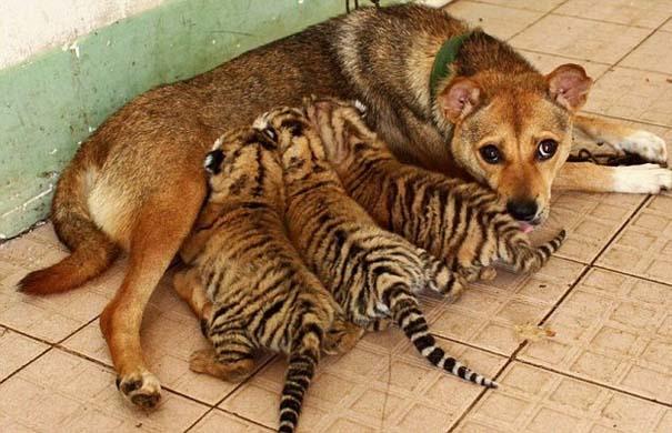 Ζώα που φροντίζουν άλλα ζώα (15)