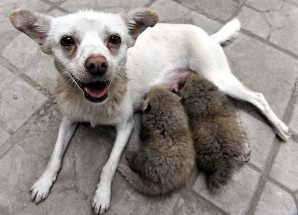 Ζώα που φροντίζουν άλλα ζώα (16)