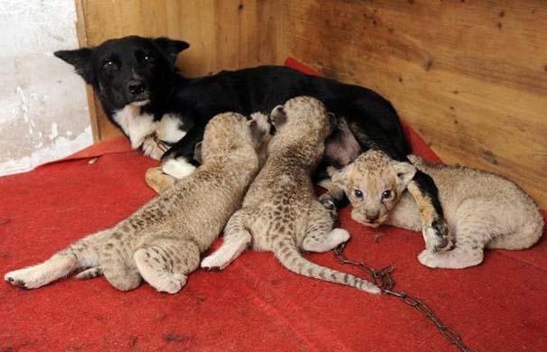 Ζώα που φροντίζουν άλλα ζώα (17)