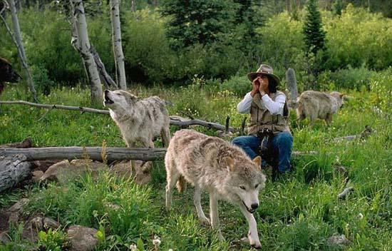Ζώντας με τους λύκους (6)