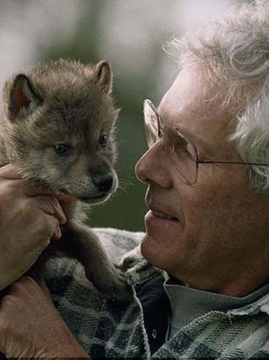 Ζώντας με τους λύκους (7)