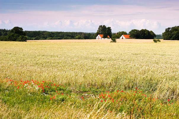 Δανία (32)