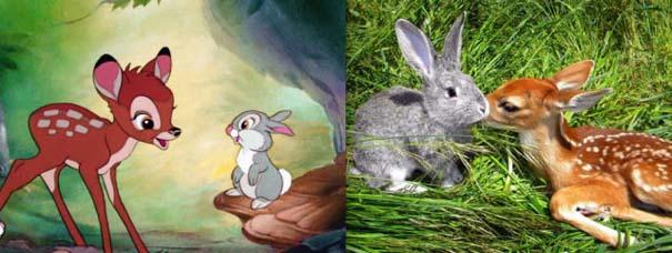 Διάσημα ζώα της Disney στην πραγματικότητα (3)