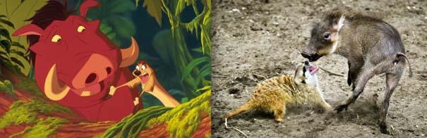 Διάσημα ζώα της Disney στην πραγματικότητα (15)