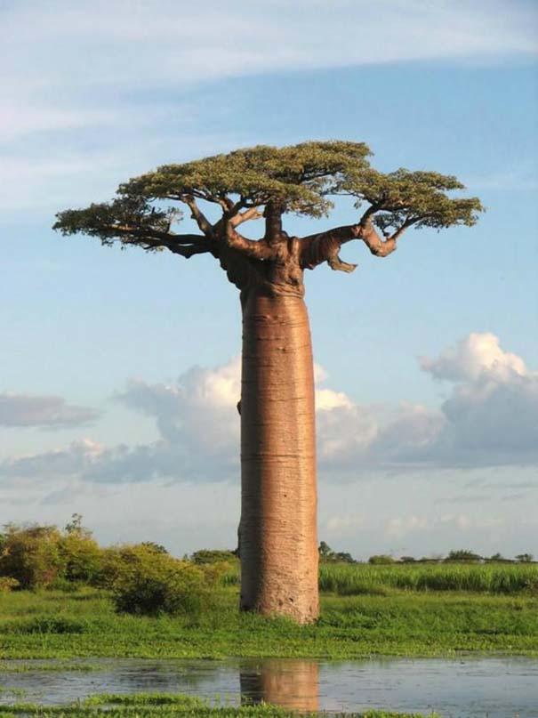 Εκπληκτικές φωτογραφίες από το Wikipedia (2)
