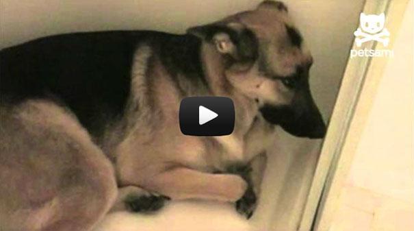 Ξεκαρδιστική αντίδραση ένοχου σκύλου