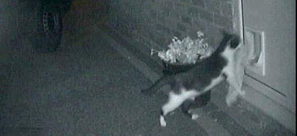 Η γάτα που κλέβει από τους γείτονες (4)