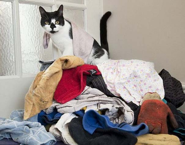 Η γάτα που κλέβει από τους γείτονες (5)
