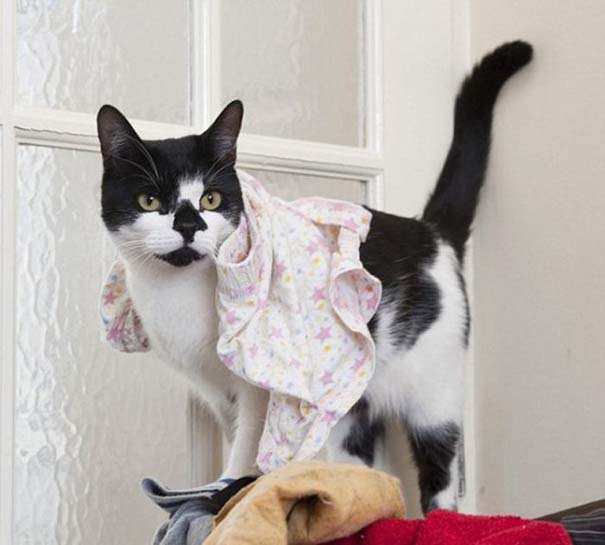 Η γάτα που κλέβει από τους γείτονες (6)