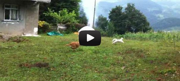 Γάτα στέλνει σκύλο «αδιάβαστο» με απίστευτη μανούβρα