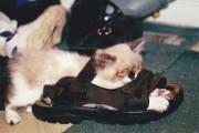 Γάτες στα πιο παράξενα μέρη (11)