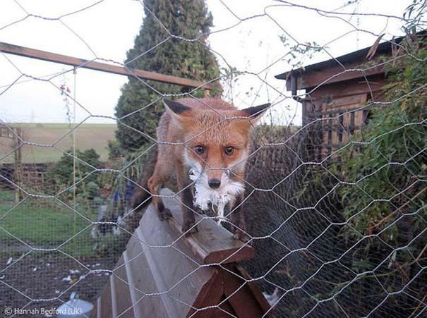 Οι καλύτερες φωτογραφίες άγριας φύσης για το 2012 (1)
