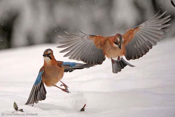 Οι καλύτερες φωτογραφίες άγριας φύσης για το 2012 (2)