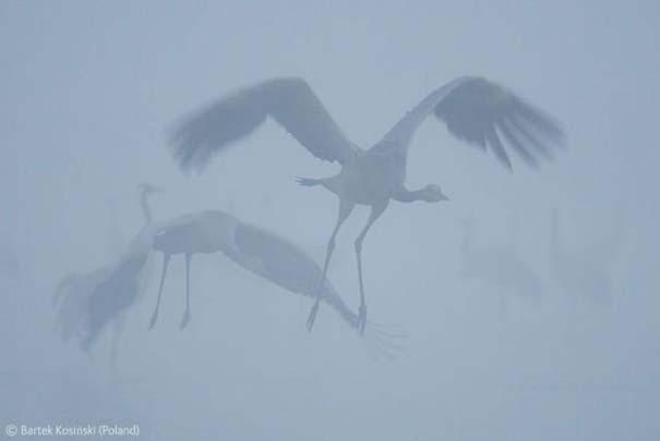 Οι καλύτερες φωτογραφίες άγριας φύσης για το 2012 (3)