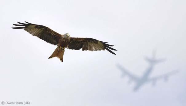 Οι καλύτερες φωτογραφίες άγριας φύσης για το 2012 (6)
