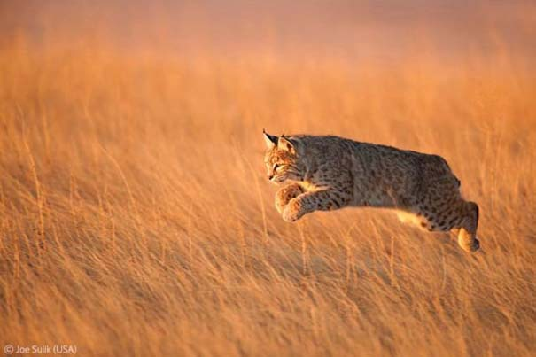 Οι καλύτερες φωτογραφίες άγριας φύσης για το 2012 (7)