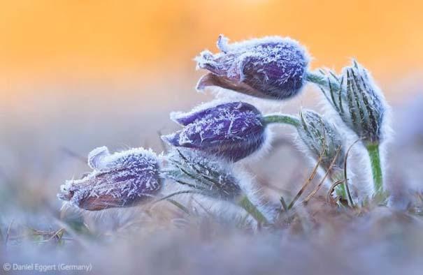 Οι καλύτερες φωτογραφίες άγριας φύσης για το 2012 (8)
