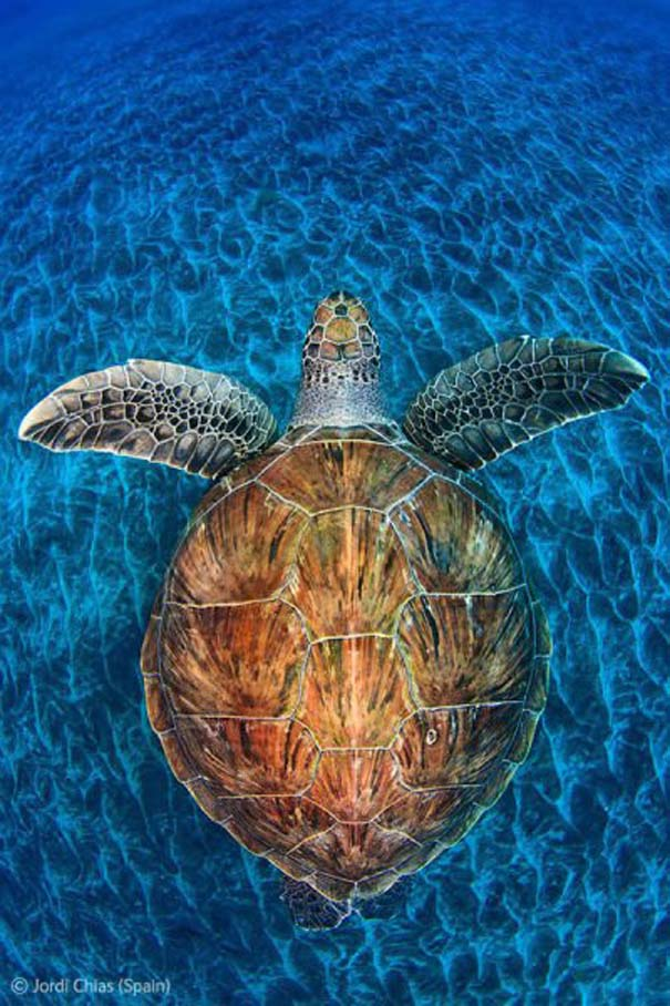 Οι καλύτερες φωτογραφίες άγριας φύσης για το 2012 (17)