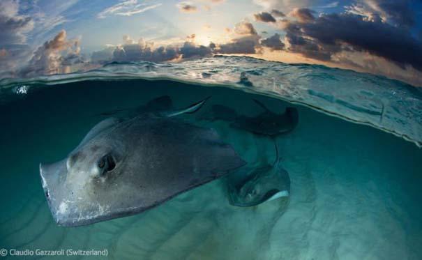 Οι καλύτερες φωτογραφίες άγριας φύσης για το 2012 (18)