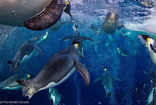 Οι καλύτερες φωτογραφίες άγριας φύσης για το 2012 (20)