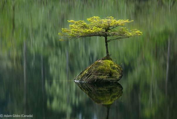 Οι καλύτερες φωτογραφίες άγριας φύσης για το 2012 (24)