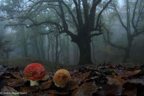 Οι καλύτερες φωτογραφίες άγριας φύσης για το 2012 (25)