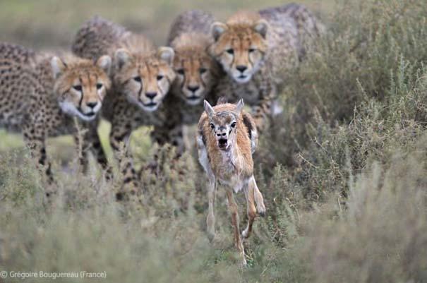 Οι καλύτερες φωτογραφίες άγριας φύσης για το 2012 (27)