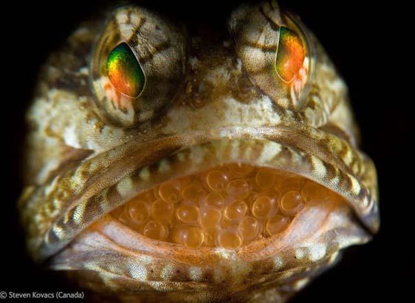 Οι καλύτερες φωτογραφίες άγριας φύσης για το 2012 (28)