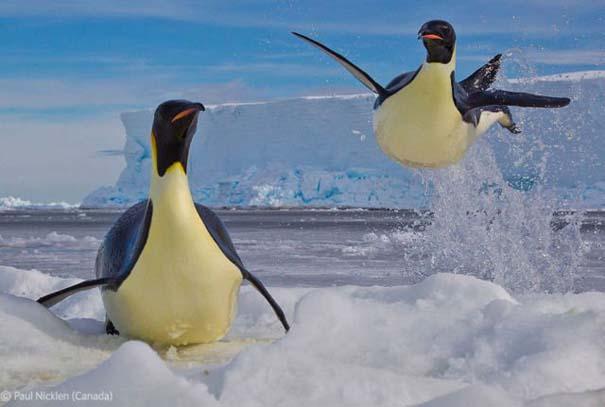 Οι καλύτερες φωτογραφίες άγριας φύσης για το 2012 (32)