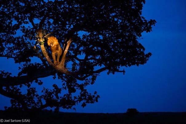 Οι καλύτερες φωτογραφίες άγριας φύσης για το 2012 (33)