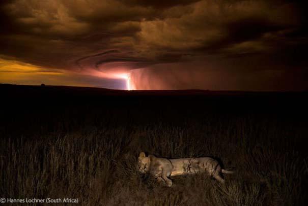 Οι καλύτερες φωτογραφίες άγριας φύσης για το 2012 (36)