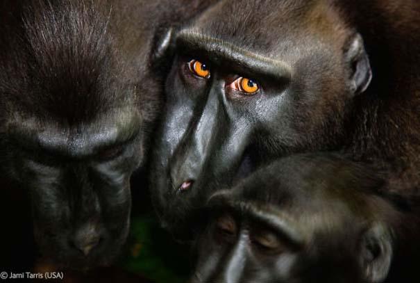 Οι καλύτερες φωτογραφίες άγριας φύσης για το 2012 (37)