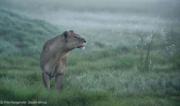 Οι καλύτερες φωτογραφίες άγριας φύσης για το 2012 (38)