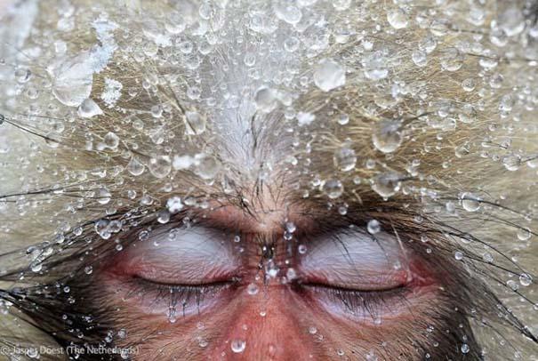 Οι καλύτερες φωτογραφίες άγριας φύσης για το 2012 (39)