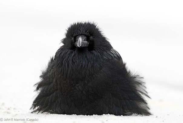 Οι καλύτερες φωτογραφίες άγριας φύσης για το 2012 (40)