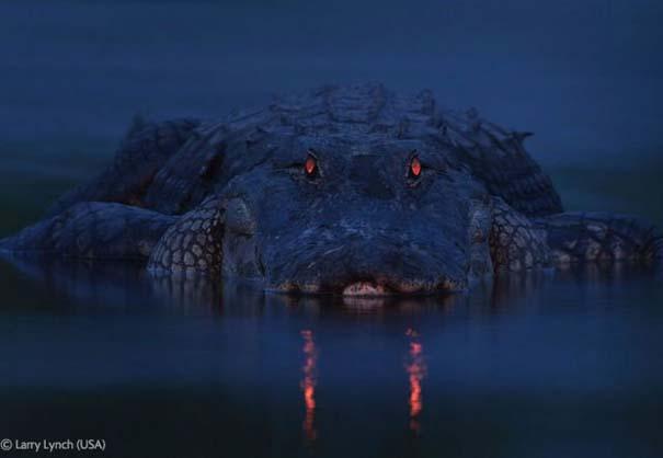 Οι καλύτερες φωτογραφίες άγριας φύσης για το 2012 (41)