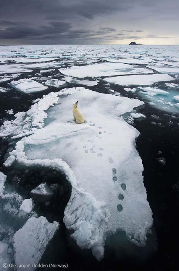 Οι καλύτερες φωτογραφίες άγριας φύσης για το 2012 (43)