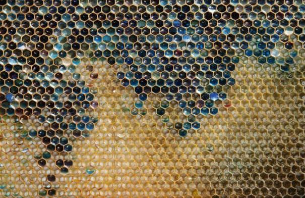 Μέλισσες παράγουν χρωματιστό μέλι (5)