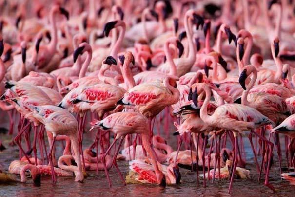 Nakuru: Η λίμνη με τα εκατομμύρια Flamingos (1)