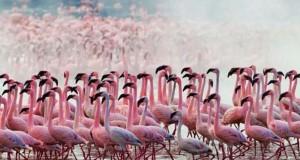 Nakuru: Η λίμνη με τα εκατομμύρια Φλαμίνγκο
