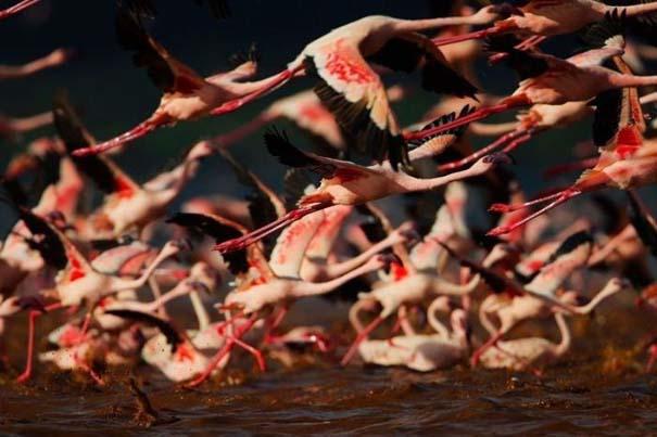 Nakuru: Η λίμνη με τα εκατομμύρια Flamingos (9)
